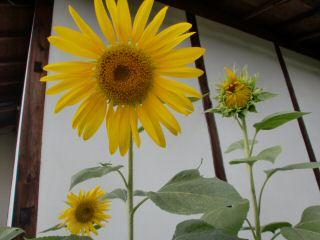 2010_08_11.jpg